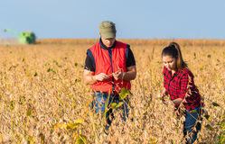 Farmers in soybean fields before harvest Stock Photo