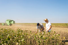 Farmers in soybean fields. Young farmers in soybean fields Royalty Free Stock Photo