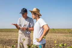 Farmers in soybean fields Royalty Free Stock Photography
