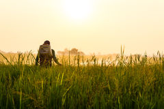 Farmers spray herbicide. In rice leaves with dew catch the morning sun Royalty Free Stock Photography