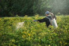Farmers spraying accelerate flowering plants in the garden Royalty Free Stock Image