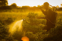 Farmers spraying accelerate flowering plants in the garden Stock Images