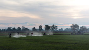 Farmers spraying herbicides. Royalty Free Stock Photos