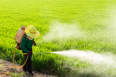 Farmers Spraying Pesticides Royalty Free Stock Image