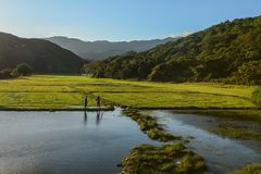 Farmers standing on paddy rice field stock photography
