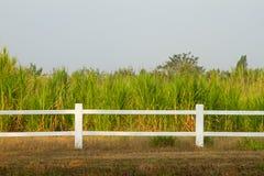 Farmers sugar cane Stock Image