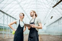 Farmers with tablet in the glasshouse royalty free stock images