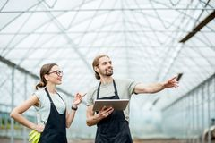 Farmers with tablet in the glasshouse stock image