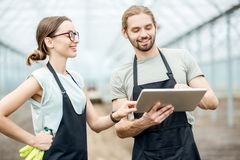 Farmers with tablet in the glasshouse stock images