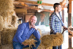 Farmers tedding straw in shed Stock Photo