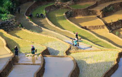 Farmers on Terraced rice fields in Vietnam Stock Images