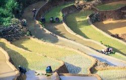 Farmers on Terraced rice fields in Vietnam Stock Photography