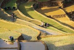 Farmers on Terraced rice fields in Vietnam Stock Photos