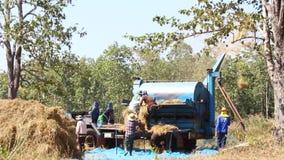 Farmers Thailand stock video
