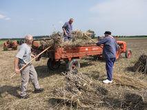Farmers in traditional clothing work with wheat sheaves in the n Stock Image