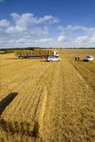 Farmers and trailer with straw bales in sunny, rural field Stock Photography