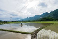 Farmers are transplanting rice in Bac Son. Lang Son, Vietnam stock image