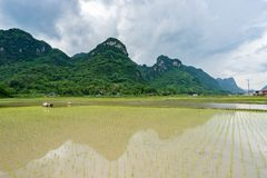 Farmers are transplanting rice in Bac Son. Lang Son, Vietnam stock images