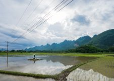 Farmers are transplanting rice in Bac Son. Lang Son, Vietnam stock photography