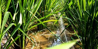 Water pump hose in the rice field royalty free stock photo