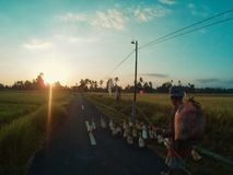 Farmers Walking with Ducks in Ubud, Bali royalty free stock photography