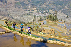 Farmers walking in the Yuanyang terracing field Stock Images