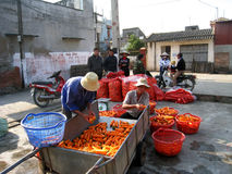 Farmers washing and classification carrot after harvest Stock Photos