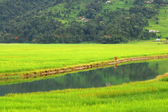 Farmers in the water reflection of fewa lake,nepal royalty free stock photos