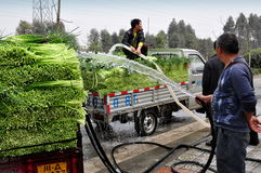 Pengzhou, China: Farmers Washing Garlic Greens Stock Image