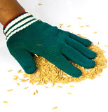 Farmers wear gloves and rice grain Stock Photo