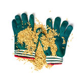 Farmers wear gloves and rice grain Royalty Free Stock Image
