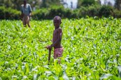 Farmers weeding Stock Photography