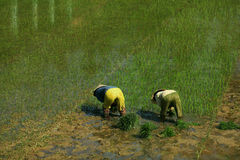 Farmers on the wet rice field planting, Vietnam Royalty Free Stock Photo