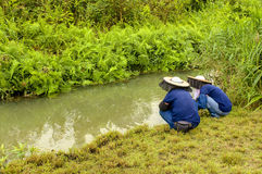 Farmers at Wetland royalty free stock photo