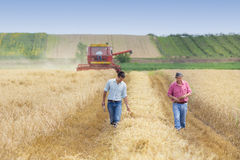 Farmers in wheat field during harvest Stock Image