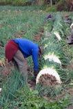 FARMERS IN WORK Stock Photo