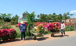 Farmers work on the flower field in Mekong Delta, Vietnam Royalty Free Stock Photo