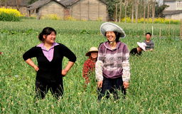 Pengzhou, China: Farmers Harvesting Garlic Royalty Free Stock Photography