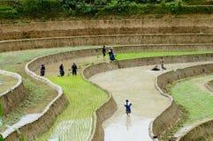 Farmers work in terraced rice field Royalty Free Stock Photo