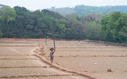 Farmers working in the fields. Dried Fields in Kochi, Kerala, India Royalty Free Stock Images