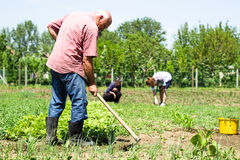 Farmers working Royalty Free Stock Photo