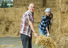 Farmers working with hay in barn Stock Images
