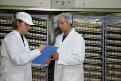 Farmers working in incubator. Chicken eggs Stock Photography