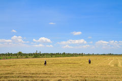 Farmers working in the rice field Stock Photo