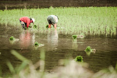 Farmers working in their field Royalty Free Stock Photography