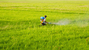 Farmer Spraying Pesticide. A farmer spraying pesticides on paddy. A photograph taken from Kuttanadu Region of Alappuzha, Kerala, India Royalty Free Stock Images