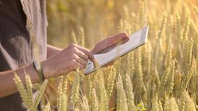 Farmerusing tablet in wheat field. Scientist working with agriculture technology
