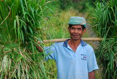 Farmes van Oost-Java stock fotografie