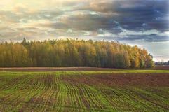 Farmfield e una foresta in un fondo, Lituania Fotografia Stock Libera da Diritti