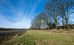 Farmfield nell'orario invernale con una fila degli alberi nudi Fotografia Stock